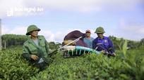 Thanh Chương: Nhiều nông sản đã 'bén' thương hiệu