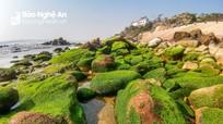 Kỳ thú bãi rêu đá biển Quỳnh