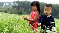 Nghệ An: Cánh đồng hoa tam giác mạch, cải trắng chớm nở đón khách du lịch