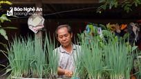 """Đưa rau rẫy về vườn nhà, đồng bào Mông ở Nghệ An vẫn duy trì """"vườn treo"""""""