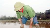 Săn lươn đồng trước vụ cấy, nông dân Nghệ An kiếm tiền triệu mỗi ngày