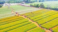 Những điểm đến hấp dẫn ở Nghệ An dịp Tết Dương lịch