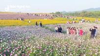 Hàng nghìn du khách đổ về cánh đồng hoa ở Nghệ An trong ngày đầu năm