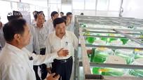 Quỳnh Lưu phải có chiến lược đẩy mạnh phát triển kinh tế biển