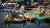 Nhộn nhịp nghề cá ở Nghi Quang