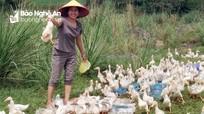 Công đoàn Nghệ An tạo sinh kế thoát nghèo cho nữ công nhân, lao động nghèo