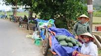 Nông dân Nam Đàn loay hoay lo đầu ra cho dưa hấu