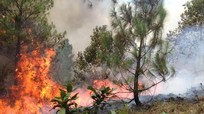 Rừng thông Nghệ An tiếp tục cháy