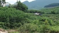 Nghệ An: Phát hiện thi thể người đàn ông tử vong bất thường gần bờ suối