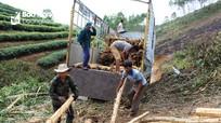 Ông Trương Đình Tuyển nói về mục tiêu 500 triệu USD từ xuất khẩu gỗ của Nghệ An