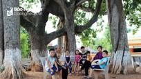 Kỳ thú những cây đa hàng trăm tuổi ở Nghệ An