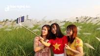 Giới trẻ đổ xô về bãi lau giữa sông Lam