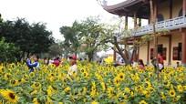 Nghệ An: Lễ hội Hoa Hướng dương 2019 sẽ có hoạt động 'hội chợ quê'