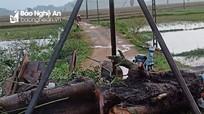 Nghệ An: Cây cổ thụ gãy đổ khiến một phụ nữ tử vong thương tâm khi đi làm về