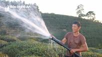 Nông dân Nghệ An gồng mình chống 'cháy' cho chè