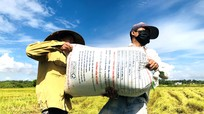 Đội tình nguyện ngày đêm giúp dân vận chuyển lúa giữa mùa dịch