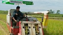 Nông dân Thanh Chương huy động cơ giới 'khủng' chạy đua vụ gặt