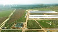Tổ hợp trang trại bò sữa của Vinamilk tại Lào dự kiến đi vào hoạt động vào quý I/2022