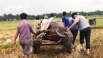 Sét đánh chết 3 con trâu sau trận mưa ở Nghệ An
