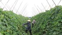 Ba vấn đề lớn cần lưu ý đối với người nông dân hiện nay
