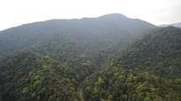 Nỗ lực bảo vệ, phát triển rừng bền vững ở Vườn Quốc gia Pù Mát