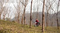 """Những khu rừng chụp ảnh đẹp như ở """"trời Tây"""" của Nghệ An"""