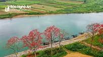 Xao xuyến mùa hoa gạo ven sông Lam