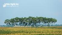 Những mảng đồng quê xanh trong con nắng đầu mùa