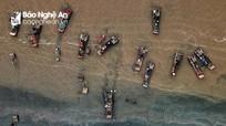 Nhộn nhịp mùa đánh bắt tôm tít trên biển Diễn Kim