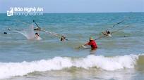 Ngư dân Nghệ An nhộn nhịp vớt 'lộc biển'