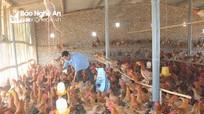 Anh nông dân biến lò gạch cũ thành trang trại chăn nuôi lớn nhất vùng