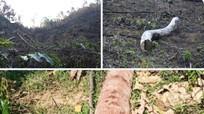 Chủ tịch UBND huyện Quỳ Châu chỉ đạo xử lý vụ việc vi phạm về phá rừng ở xã Châu Thuận