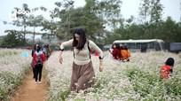 Những hình ảnh xấu xí trên cánh đồng hoa Nghệ An