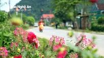 Hút mắt cảnh quan làng hoa miền Trà Lân