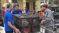 Trung ương Đoàn hỗ trợ cho thanh niên Nghĩa Đàn 3.000 con gà giống