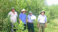 Thực hiện tốt công tác trồng rừng thay thế