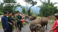120 hộ nghèo Kỳ Sơn và Quế Phong được nhận trâu, bò giống