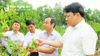 Đô Lương đẩy mạnh ứng dụng công nghệ cao trong nông nghiệp