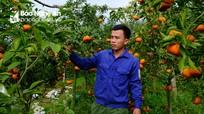 Kỹ sư 9X bỏ doanh nghiệp lớn về trồng cây cảnh phục vụ Tết