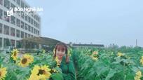 """Độc đáo """"cánh đồng hoa hướng dương"""" của sinh viên Đại học Vinh"""