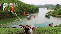 Đảo chè Nghệ An hút khách du Xuân
