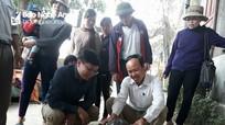 Nghệ An: Cá thể rùa nặng 5,5 kg đã được thả về biển