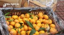 Bắt giữ 2 tấn hoa quả không rõ nguồn gốc từ Thanh Hóa về Nghệ An tiêu thụ
