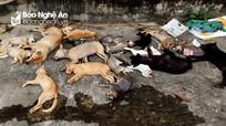 Chó mèo chết la liệt vì bị trúng bả của hai anh em ruột ở thành phố Vinh