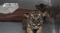 Nghệ An: Siết chặt hoạt động mua bán, nuôi nhốt động vật hoang dã trái phép