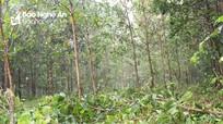 Nghệ An: Vẫn còn đơn vị chây ỳ không nộp tiền vào quỹ để trồng rừng thay thế