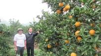 Nhiều bất cập trong thực hiện chính sách đầu tư phát triển nông nghiệp của Nghệ An