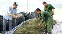 Đồng bào Thái Con Cuông trồng thêm 3ha dược liệu theo VietGAP