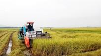 Bắt băng nhóm dùng súng bảo kê máy gặt lúa ở Thanh Chương
