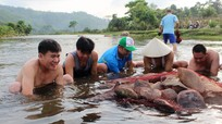 Đắp lũy đá bắt cá đặc sản ở vùng cao Nghệ An